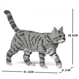 Chat Tigré gris clair