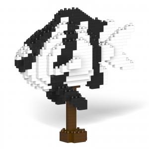 Poisson Demoiselle à queue blanche